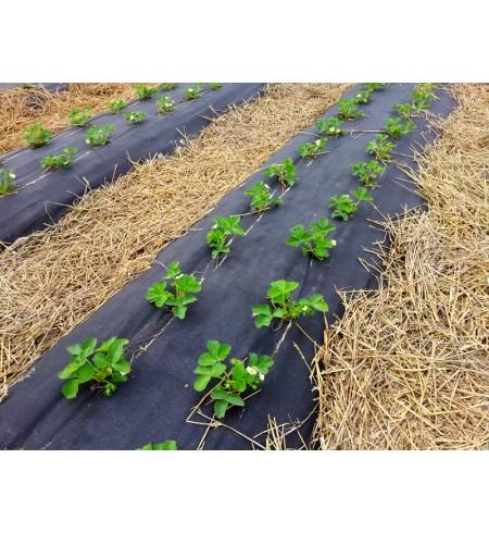 Folia do ściółkowania gleby - ogrodnicza 1x2000mb. bez dziur
